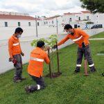 Plantação de Árvores no Espaço dos Quarteis
